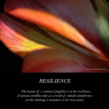 resilience_8